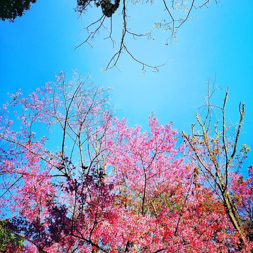 Sky Nature Tree