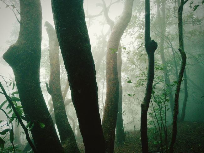 Tree Trunk Forest Nature Beauty In Nature Fog WoodLand Mist Solitude Forestwalk Matheran Hills Forest Photography Forest Of Lost Souls