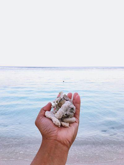 Sea shell sea