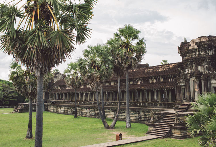 Siem Reap Cambodia Angkor Angkor Wat Angkor Wat, Cambodia Tree Plant Palm Tree Architecture Tropical Climate Built Structure Sky Nature Day Building Exterior Grass History The Past Travel Destinations Travel Tourism Incidental People Ancient Green Color Growth Outdoors Ancient Civilization Archaeology