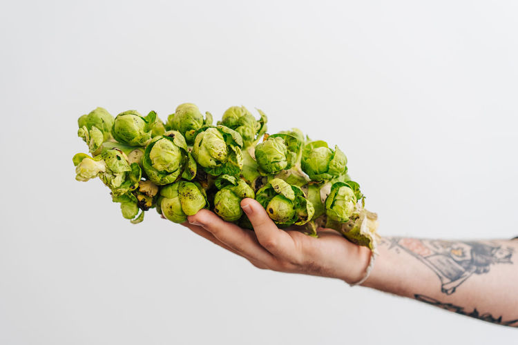 Close-up of hand holding brussels sprout over white background