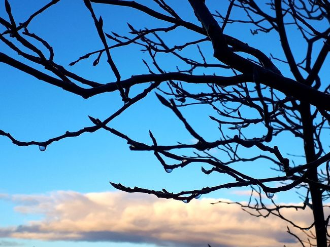 Waterdrops Sunset Tree Branch Bare Tree Sky Silhouette Outline
