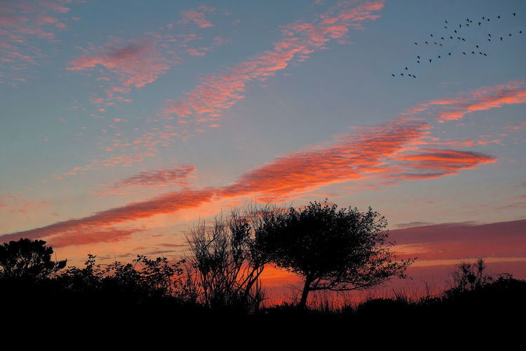 Sunset in Ocean Shores, WA Tree Sunset Silhouette Beauty In Nature Sky Nature Scenics No People Outdoors Tranquility Low Angle View Sunset_collection Sunset Silhouettes Multi Colored Wild Colorful Birds Flock Of Birds Beach Ocean Sea Seagrass Bush Bushes Foliage The Great Outdoors - 2018 EyeEm Awards