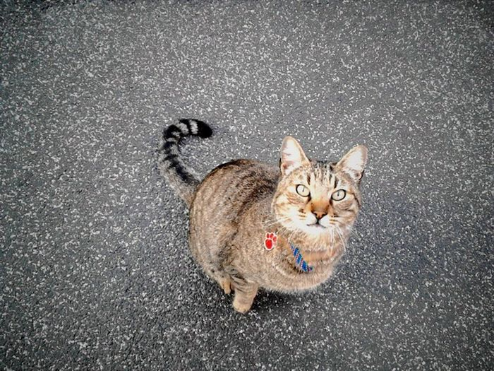 Cat In The Street Who Are You ? Nice To Meet You See You Soon