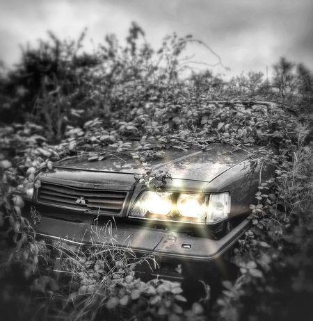 Bipolaroidasylum Rsa_preciousjunk Black & White Junk Cars