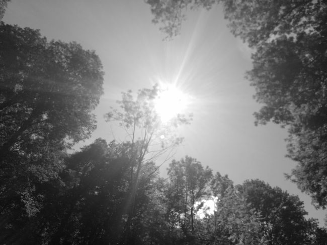 Tree Sunbeam Nature Forest No People Outdoors Sun Sunlight Sky Low Angle View Beauty In Nature Day Phonephotography📱 Blackandwhite Photography Black&white Eyeemphonephotography Silhouette Low Angle View Tree Nature Outdoors Photograpghy  Blacckandwhite Outdoors Photograpghy