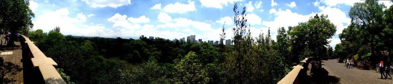 Tree Sky Nature Cloud - Sky Outdoors Day Beauty In Nature Panoramic Photography Chapultepec CDMX Forest Trees Cityscapes_collection Mexico City Traveling