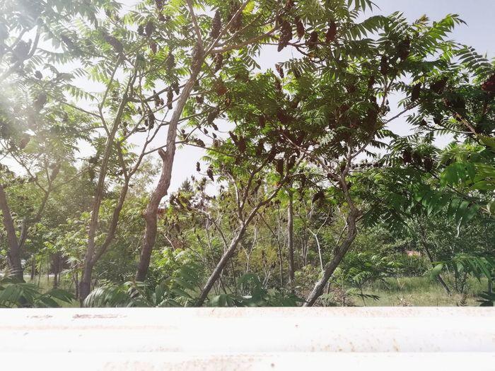 Tree Branch Sky Plant