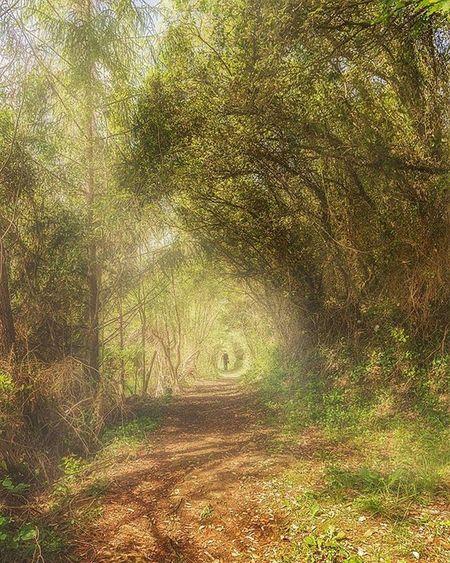 Cantabria Cantabria_y_turismo Marismasajo Bosque Forest Camino Senderos Ajo Turismospain Bosques Forests Otoño Luz Caminodeluz