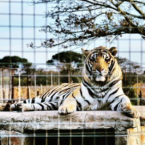 my Photography Lion Park Wild Animals