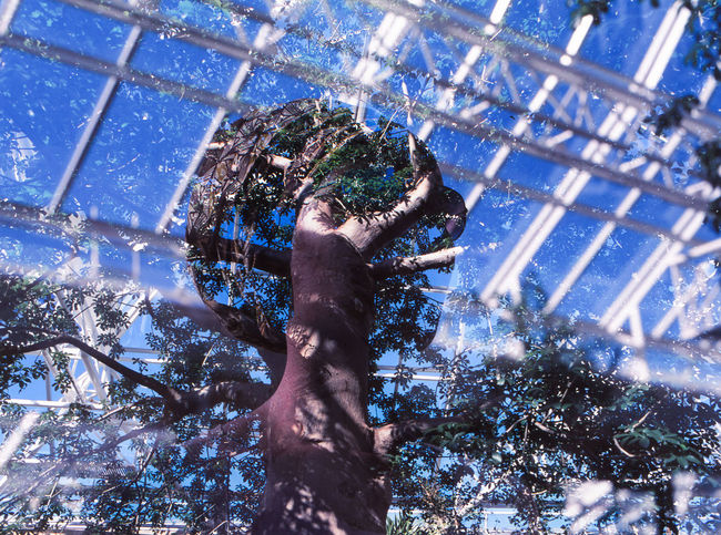 Double Exposure Slide Film Abstract Animal Animal Themes Architecture Art And Craft Branch Built Structure Ceiling Day Film Photography Low Angle View Nature No People One Animal Outdoors Plant Sculpture Sky Statue Tree Tree Trunk Winter