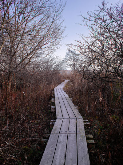 Way out of Winter woods towards brightness Tree Plant Nature The Way Forward Tranquility Forest Direction Sky Bare Tree No People Footpath Boardwalk Outdoors Beauty In Nature Diminishing Perspective Bright Future Prospect Trail Path Walkway Autumn Winter Seasonal darkness and light
