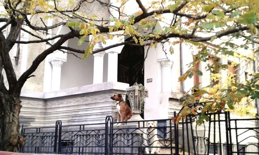City Life Animals Dogs