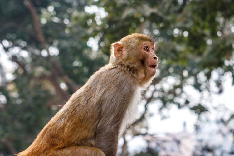 Low angle view of monkey