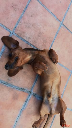 Paco The Devil EyeEm Selects Mammal One Animal Domestic Animals Pets Domestic High Angle View