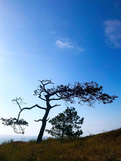 Tree Sky Nature Beauty In Nature Landscape Day Field Outdoors Tranquility Lone Blue Low Angle View Growth No People Scenics Branch Bare Tree Grass IPhone7Plus IPhoneography Desert