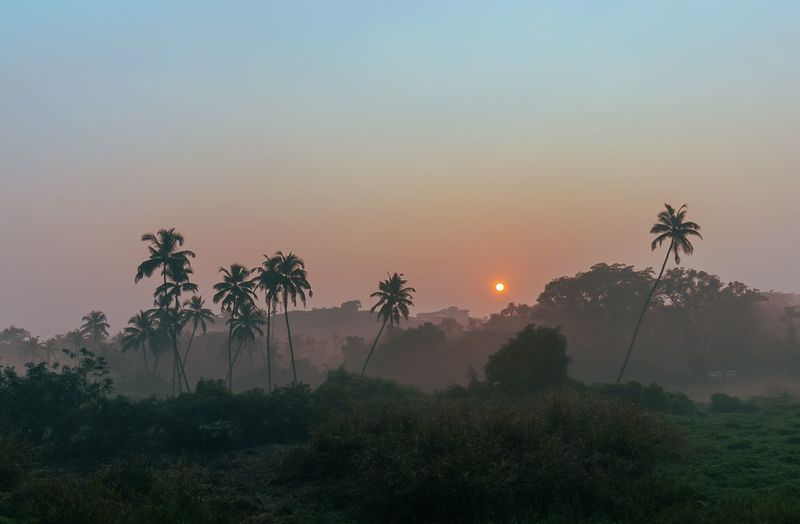 Silhouette palm trees against sky during sunrise in goa