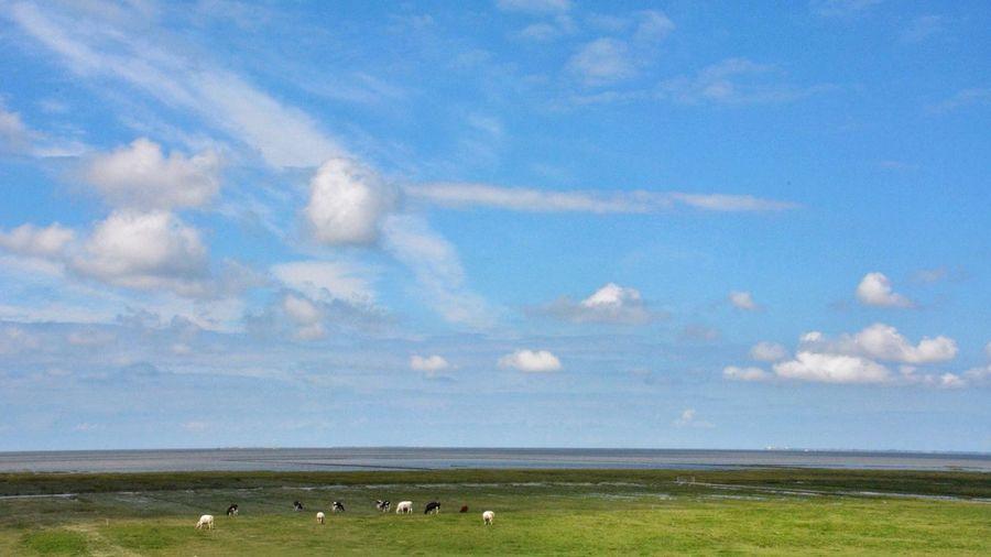 Dutch Landscape Groningen Noordpolderzijl Landscape_Collection