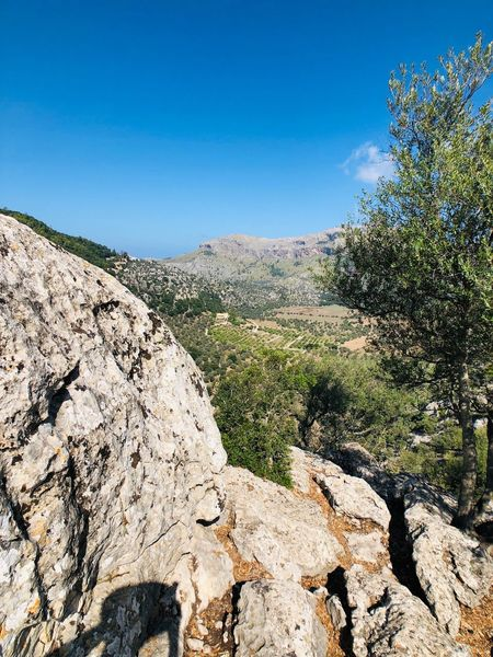 Mallorca EyeEm Selects Sky Plant Tree Blue Nature Tranquility Scenics - Nature No People Day Tranquil Scene Landscape Growth Rock Copy Space Beauty In Nature Environment Clear Sky Land Sunlight Solid
