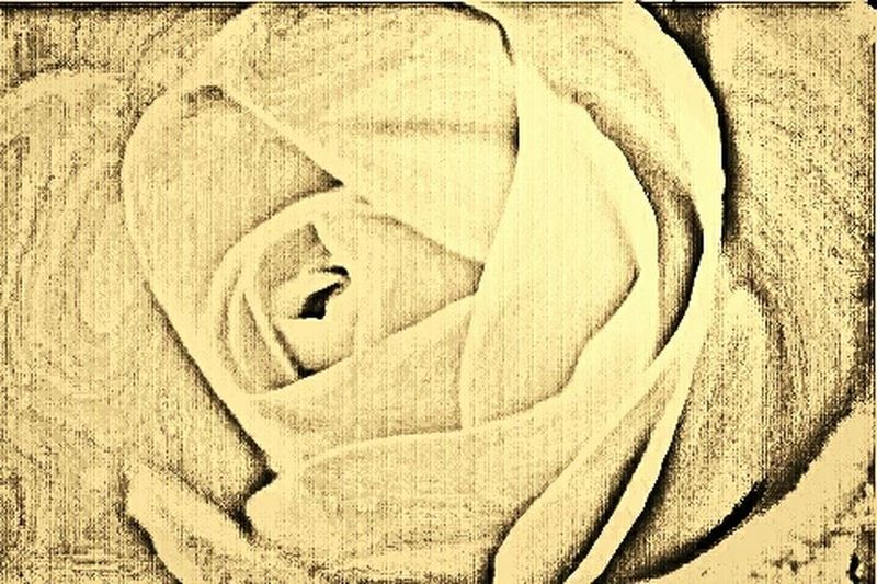 Paulette's Photograph, From 2015  Sephia Photo The ROSE SKETCHING
