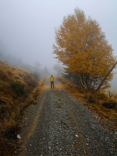 Rear view of man walking on road by trees during foggy weather