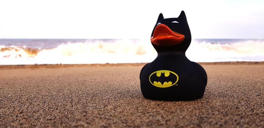 Bat duck Batduck Batman EyeEm Selects Beach Sky Shore Sand Wave Rushing Crashing Sandy Beach Ocean