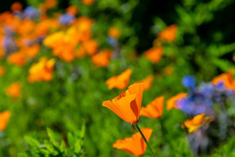 Close-up of orange yellow flowering plant