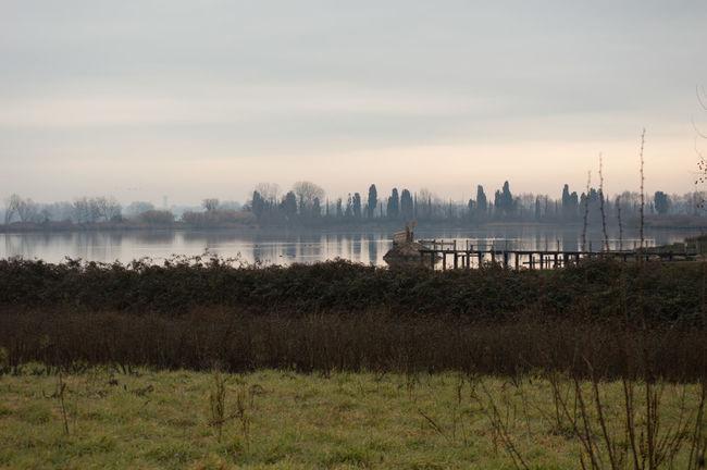 Animal Themes Animals In The Wild Birds Ducks Fog Greyscale Lake Landscape Nature Peace Storytelling Storytellingphotography Water Winter