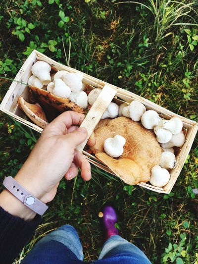 Mushroom Picking Picking Mushrooms Autumn Fall Basket Human Hand Holding One Person Boots High Angle View Human Body Part Healthy Eating Food And Drink Freshness Outdoors Organic Food Day Growth Lifestyles Fungus Leisure Activity Only Women Second Acts Food Stories