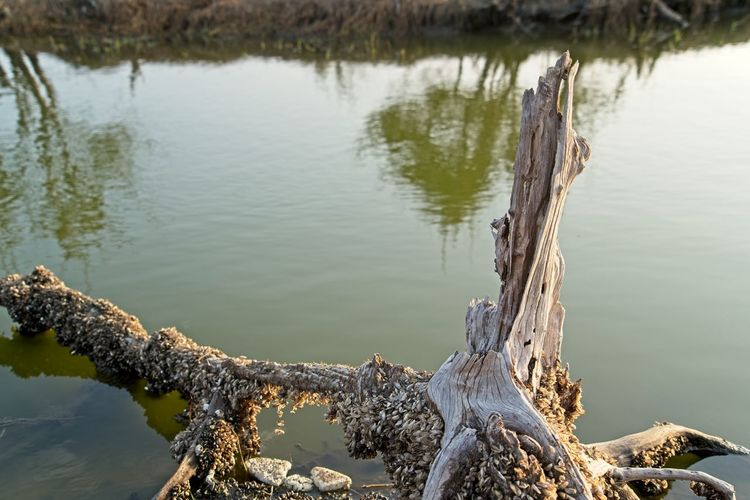 High angle view of tree trunk by lake