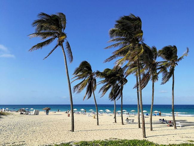 Santa Maria Beach near Havana, Cuba. Playa Santa Maria, Del Estes. Beach Sea Tree Palm Tree Water Sand Sky Nature Blue Atlantic Ocean Sandy Cuba Horizon Seaside Seascape Travel Ocean Atlantic Tranquil Scene Sunshades Tranquility Tropical Santa Maria Beach Caribbean Vacation