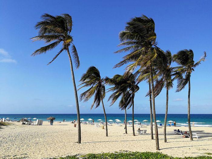 Santa Maria Beach near Havana, Cuba. Playa Santa Maria, Del Estes. Beach Sea Tree Palm Tree Water Sand Sky Nature Blue Atlantic Ocean Sandy Cuba Horizon Seaside Seascape Travel Ocean Atlantic Tranquil Scene Sunshades Tranquility Tropical Santa Maria Beach Caribbean Vacation