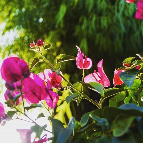 Hope Flor