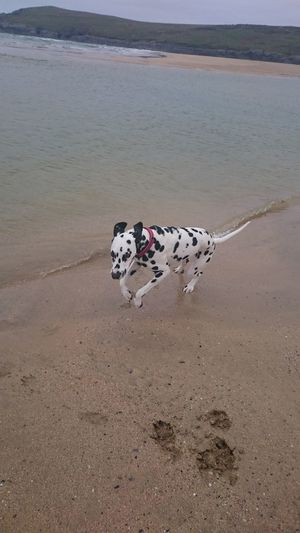 Dogslife Beach Life Doglover Bestfriend Dog Beach Cornwall Beach Newquay Beachphotography Crantock
