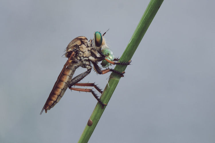 Close-Up Of Fly On Plant Against Sky