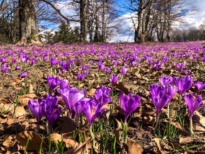 Flowering Plant Flower Plant Beauty In Nature Freshness Purple Field