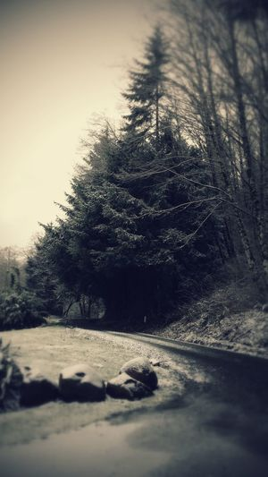 Pacific Northwest  Following The Path... Tree Love Check This Out