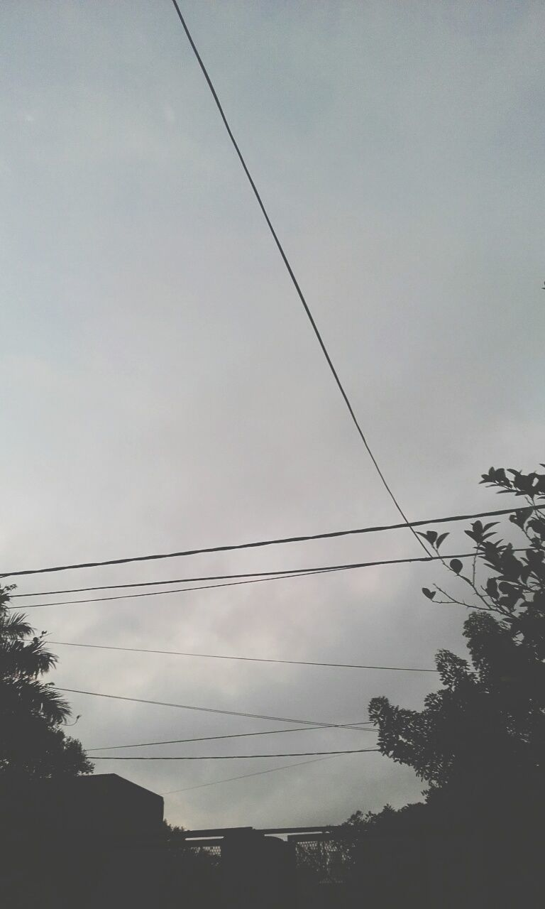 cable, power line, connection, low angle view, electricity, tree, power supply, sky, no people, electricity pylon, nature, outdoors, fuel and power generation, telephone line, day, technology, beauty in nature