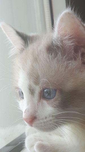 Babycat Sweet Babycat Cat Lovers Cat's Eyes Cat's Face Eye4photography  EyeEm Gallery