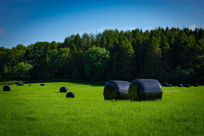 Hay bales on field by trees against sky