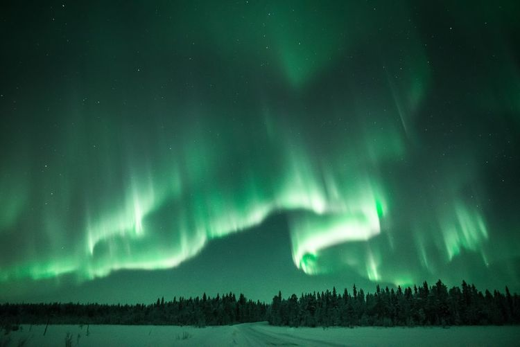 Green on the north sky Night Beauty In Nature Green Color Scenics - Nature Sky Space Tree Astronomy Tranquil Scene Tranquility No People Nature Land Cold Temperature Star - Space Landscape Snow Aurora Polaris Power In Nature Light Wilderness Weather Scenics Photography Outdoors