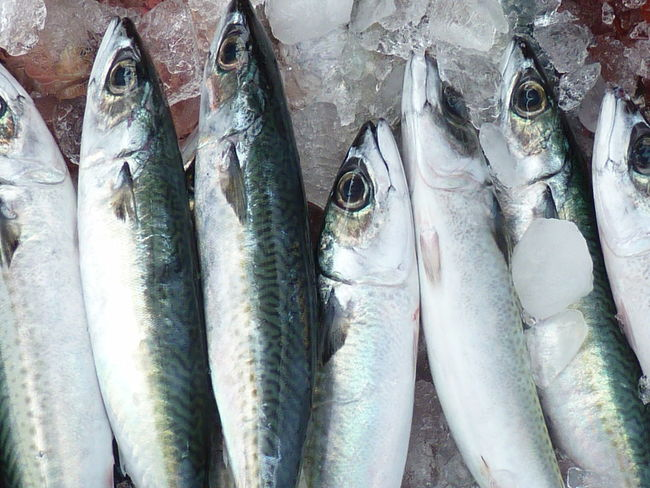 Mackerel Animal Backgrounds Close-up Day Fish Fish Market Food Food And Drink For Sale Freshness Full Frame Healthy Eating Ice Large Group Of Objects Mackerel Mackerel Fish Market No People Outdoors Raw Food Retail  Retail Display Sale Seafood Silver Colored Vertebrate Wellbeing