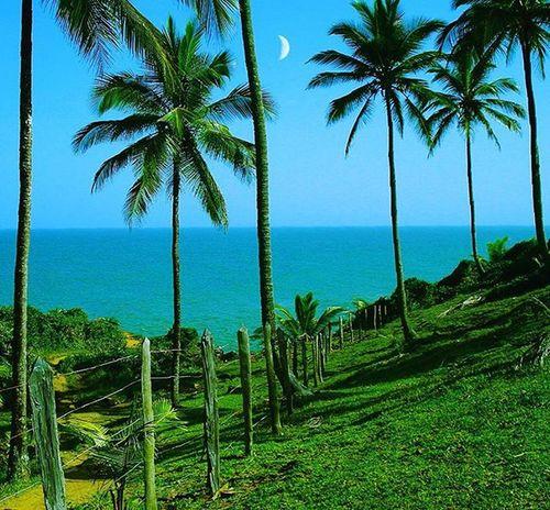 Itacare Bahia Brasil Dx300 Sony Nature Beautiful Instagood Landscape Photooftheday Picoftheday Travelphotography Traveler Picoftheday Instaphoto Instalike Dx300 Coqueiros Coconut Beach Summer Fotografia Natureza Lua  Moon