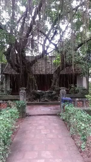 Architecture Ninh Bình South East Asia Vietnam Absence Architecture Beauty In Nature Built Structure Day Direction Footpath Front Or Back Yard Growth Nature No People Outdoors Park Park - Man Made Space Plant Temple The Way Forward Tranquility Tree Tree Trunk