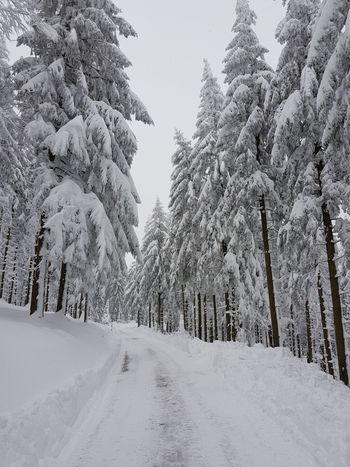 Winter in the Forest Schwarzwald Cold Cold Temperature Frozen Landscape Nature Pine Tree Pine Woodland Schwarzwaldhochstrasse Snow Weather Winter