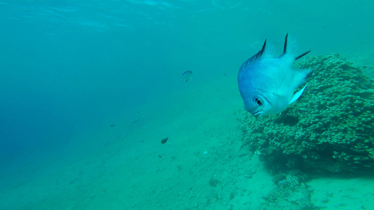 underwater, animals in the wild, swimming, animal themes, undersea, sea life, water, animal wildlife, nature, sea, one animal, no people, day, mammal, close-up, beauty in nature, outdoors
