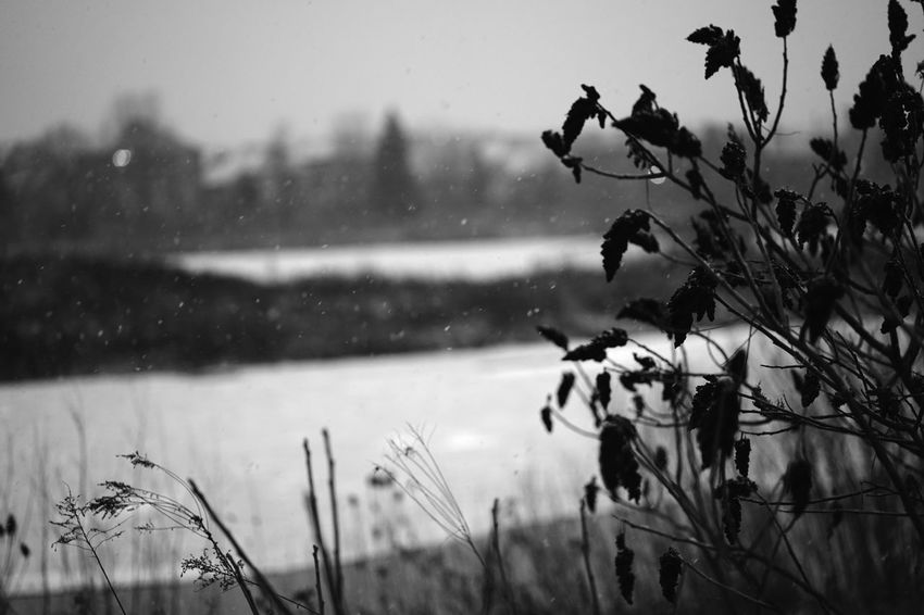 wintery pond view Black And White Bokeh Cold Depth Of Field Monochrome Pond SnW Storm Windy Winter