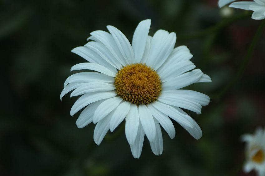 Face Flower Flower Flowering Plant Freshness Fragility Plant Vulnerability  Petal