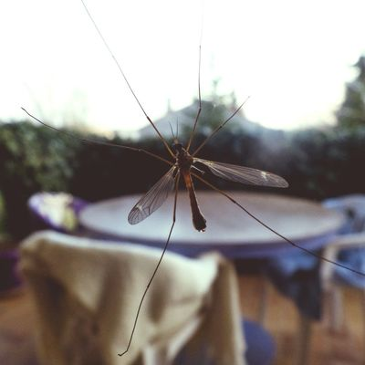 Moustic Air Taking Photos Insects