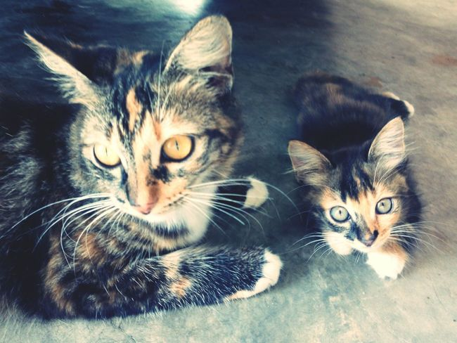 Playing With The Animals The Twins Cute Cats Cuteness